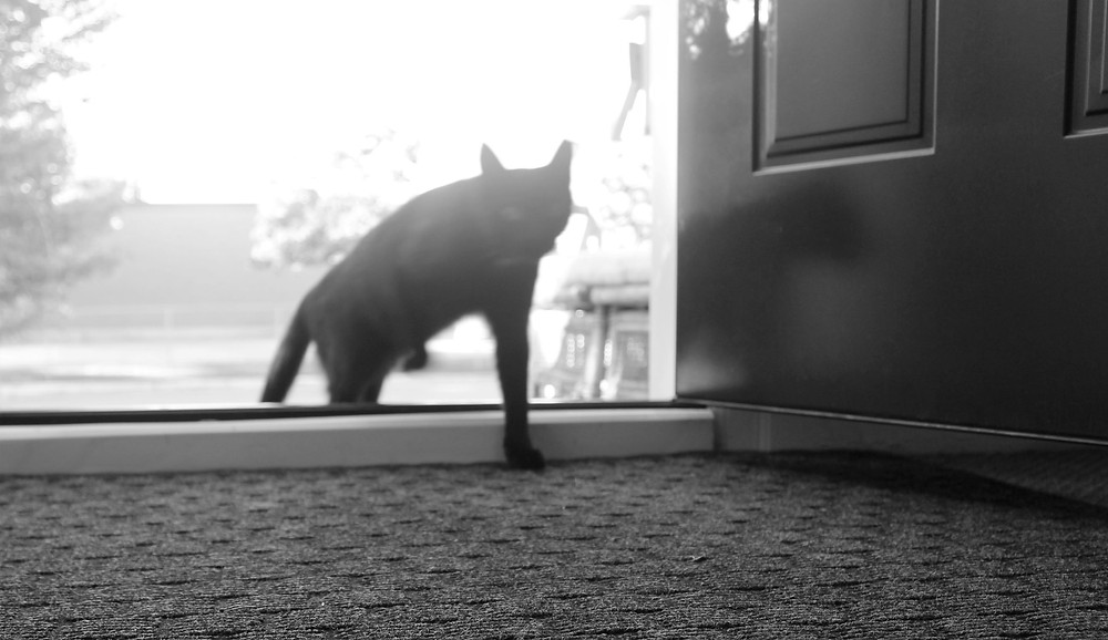 A stray cat cautiously enters the front door of a house.