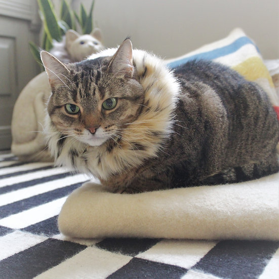A Tabby cat wearing a Pet Ruff made from Vintage Jaguar Faux Fur