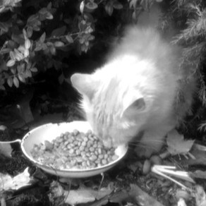Stray Cats 1; The Wild, Domesticated Animals