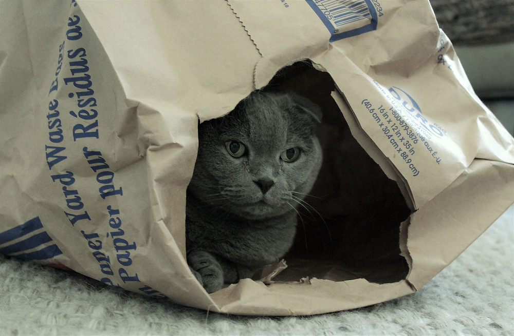 A cat hides in a bag waiting to pretend-hunt with his owner