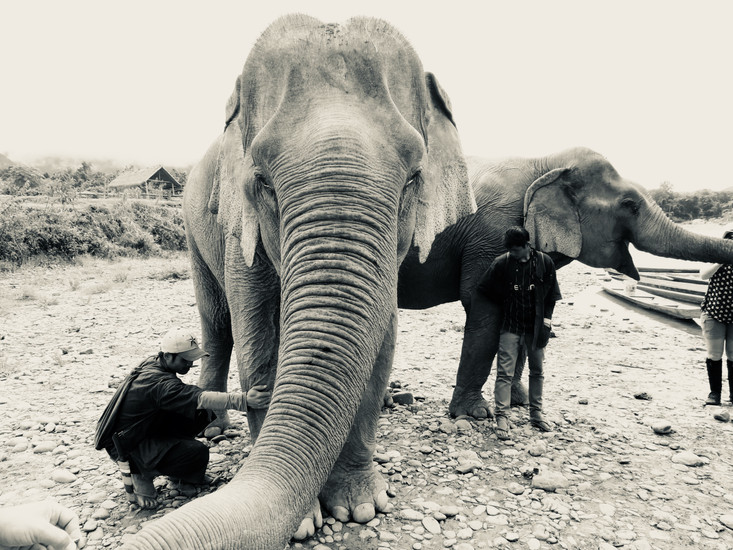 My last full day in Laos was absolutely magical as I found out about an Elephant Sanctuary where you