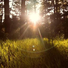 Rosemar : La prise de conscience écologique.