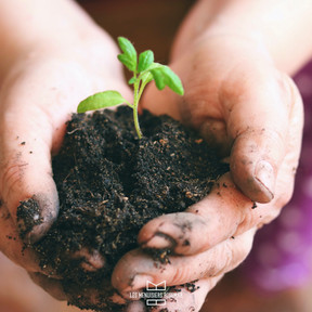 Préservez la planète, améliorez votre bien-être, changez vos fenêtres !