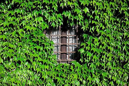 Une approche éco résponsable - Buisson de Feuilles autour d'une fenêtre - Les Menuiseries Rosemar - Artisan, Ile de France