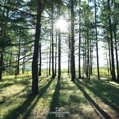 Comme vous, nous sommes de plus en plus attachés aux forêts !