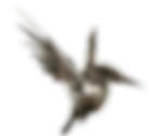 Logo C4A.png
