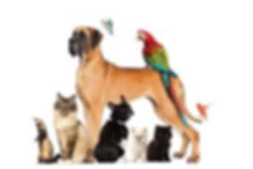 pets1-kYdB--621x414@LiveMint.jpg