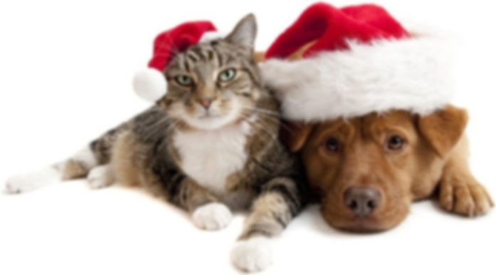 lovely_christmas_cats_and_dogs_highdefin