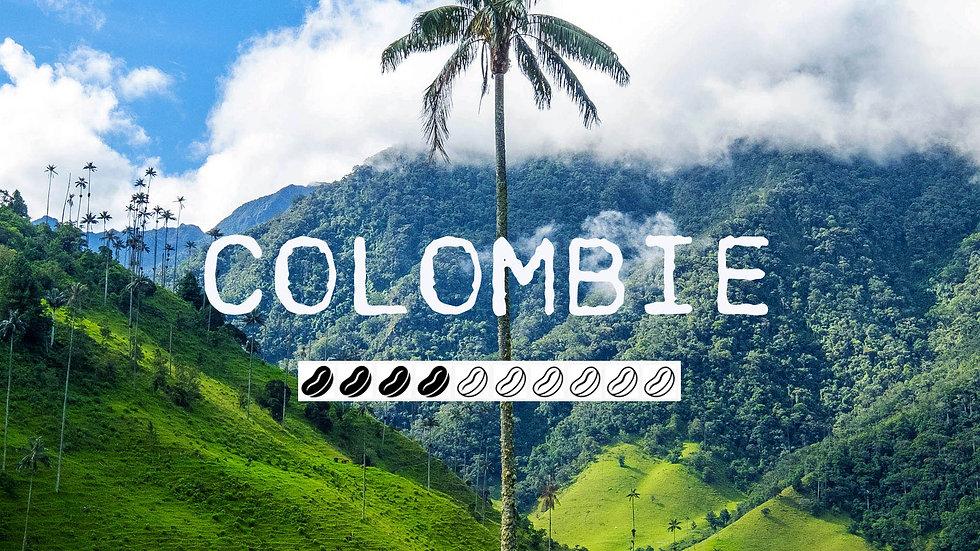 COLOMBIE SUPREMO - Quindio