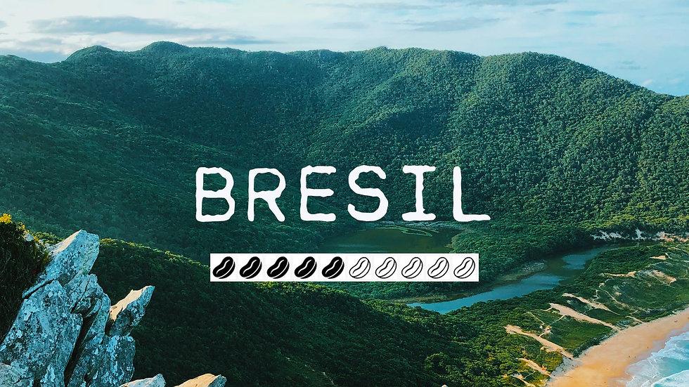 BRESIL YELLOW BOURBON - Sao Paulo