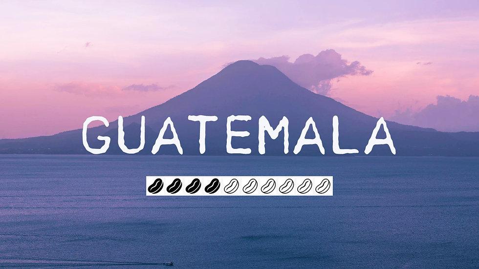 GUATEMALA - Finca El Platanillo