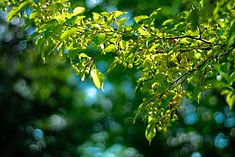 summer branches.jpg
