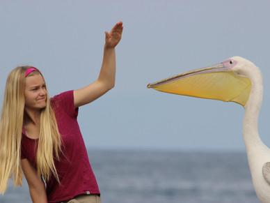 My Pelican Predicament