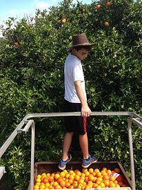 A young boy wearing a cowboy hat looks at his orange harvest