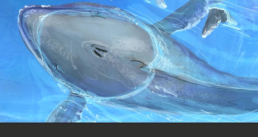 whale short clip.mp4
