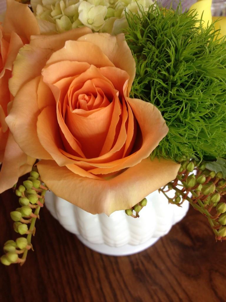 A Rose by Prairie Petals
