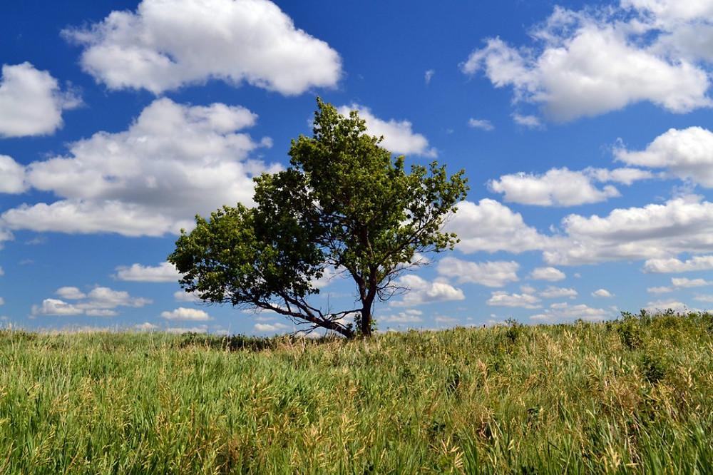 standing-rock-tree