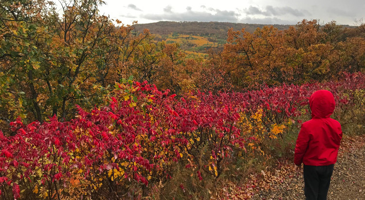 Fall Colors In The Pembina Gorge and Tetrault Woods State Forest
