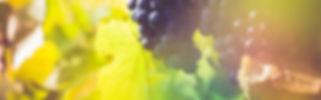 fond raisin.jpg