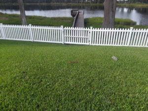 dog pen fence 4.jpg