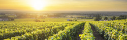 Vignes de Beaujolais 01