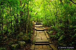 An ancient trail: Ritigala