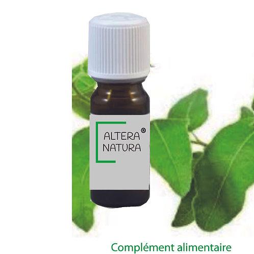 Eucalyptus citroné 10 ml