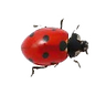 coccinelle_edited.png