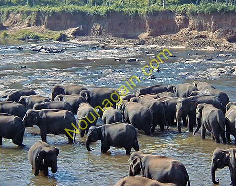 Elephant Park Sri Lanka