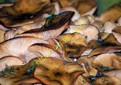 Fungi 2