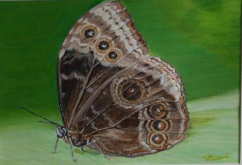 Butterfly in Profile