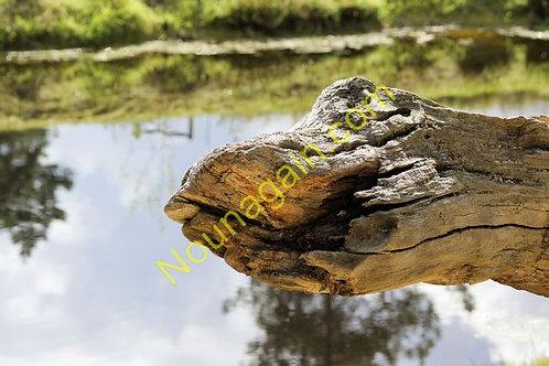 Dino Log