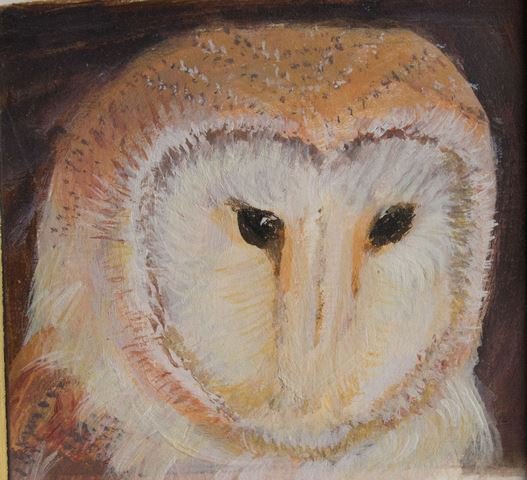 Small Barn Owl