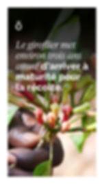 CA_FR_WA_Sourcing_Story_Clove_1080x1920p