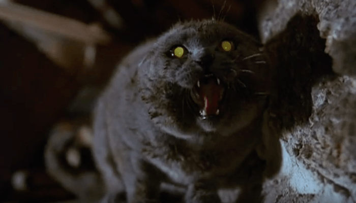 Church, the undead cat in Pet Semetary