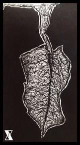 Leaf Intricacies Sketchbook.JPG