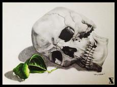 Skull & Leaf Thesis.JPG