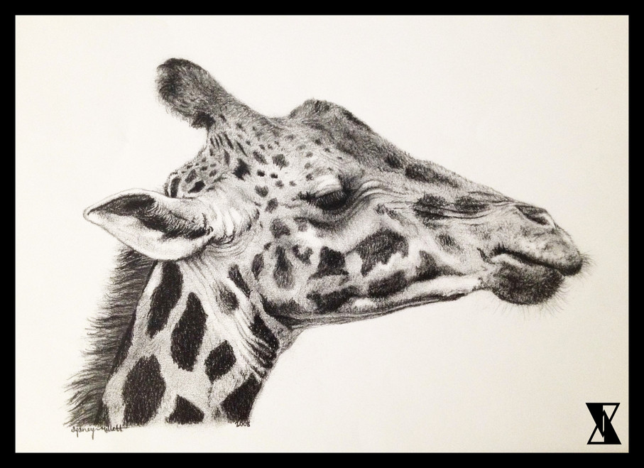 Giraffe in Graphite.jpg