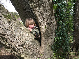tree2 - Copy.jpeg