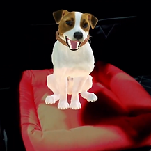 Nissan Kicks for Pets Advergame Magic Leap