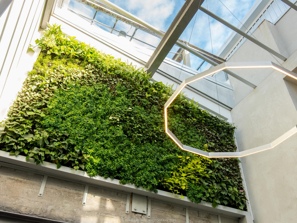 GREENWALL - ATRIUM - NATURE