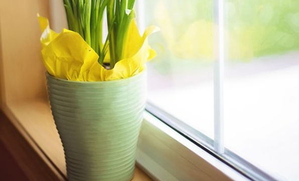 daffodils-1316128_640.jpg