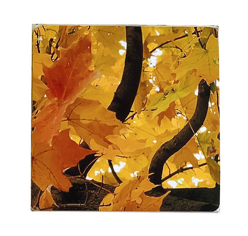 Fall Leaves - Coaster(s)