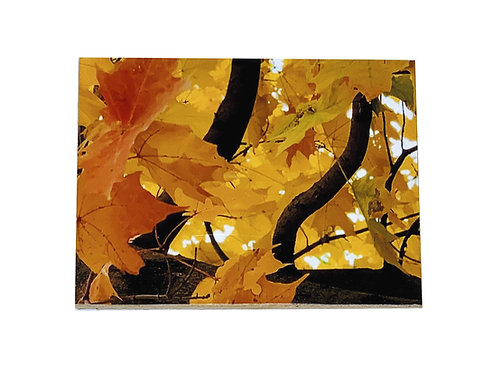 Fall Leaves - Wall Magnet