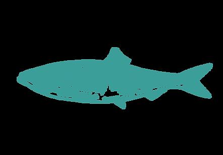 herring-digital-line-drawing-sarah-dowli