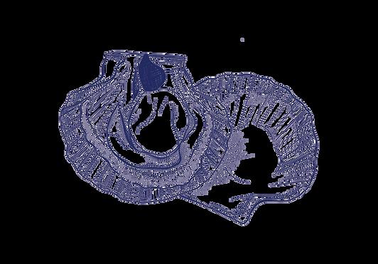scallops-digital-line-drawing-sarah-dowl