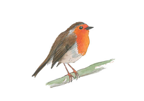 Robin PNG.png