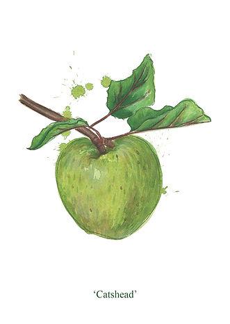 splashy-watercolour-cooking-apple-painti