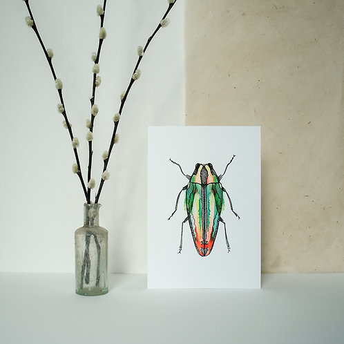A5 Orange Beetle Print