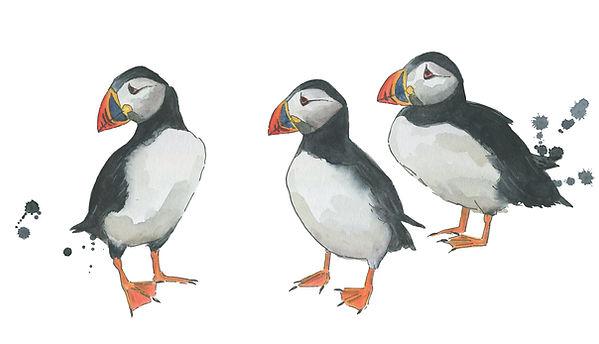 puffin-watercolour-illustration-sarah-dowling-bristol-illustrator.jpg